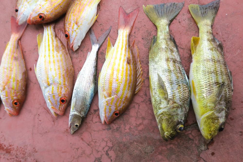 Fish Guatemala