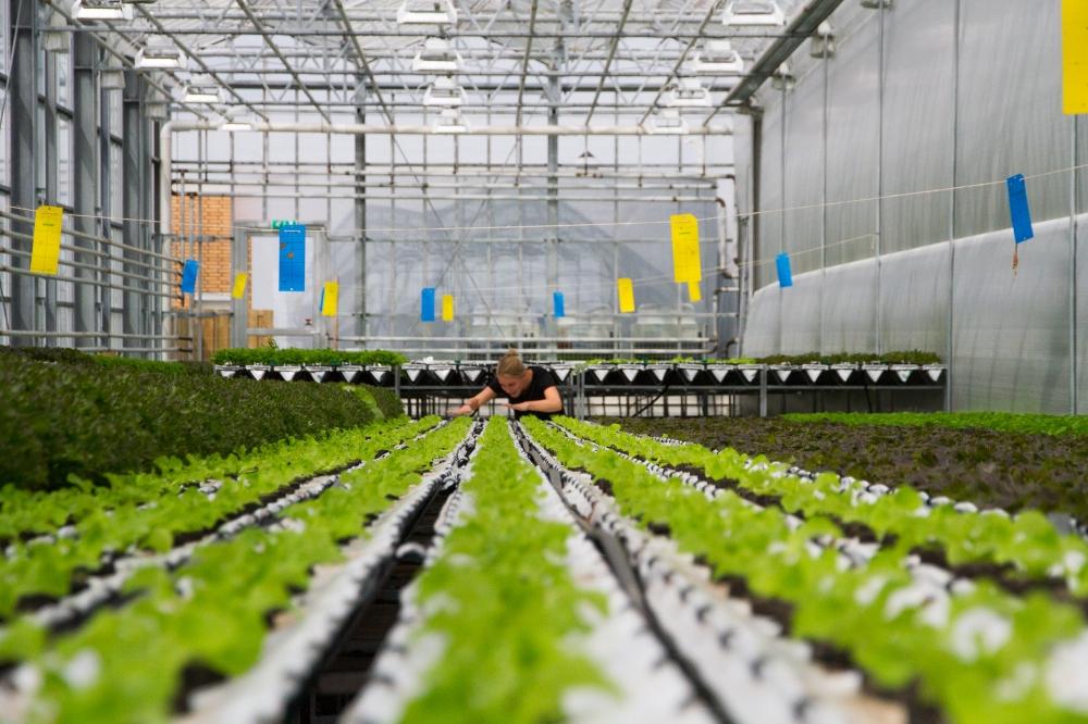 Haagse Ceviche // Urban Farm De Schilde