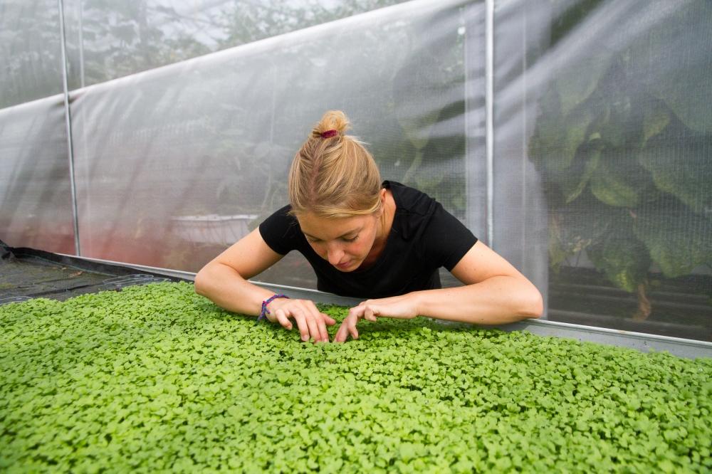 Haagse Ceviche Urban Farm De Schilde // Rosalie Ruardy