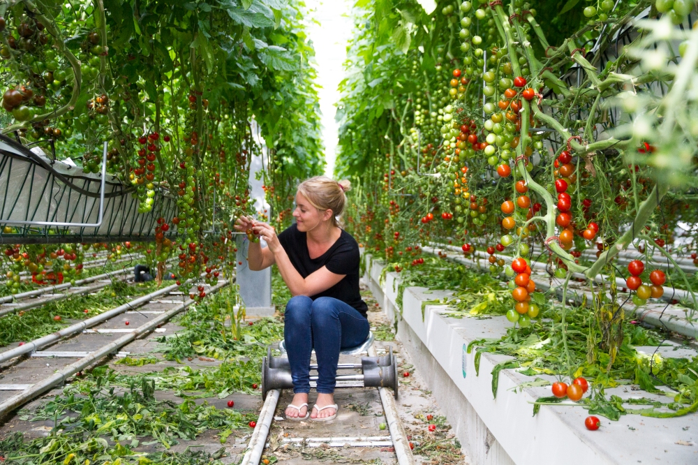 Haagse Ceviche - Urban Farm De Schilde // Rosalie Ruardy